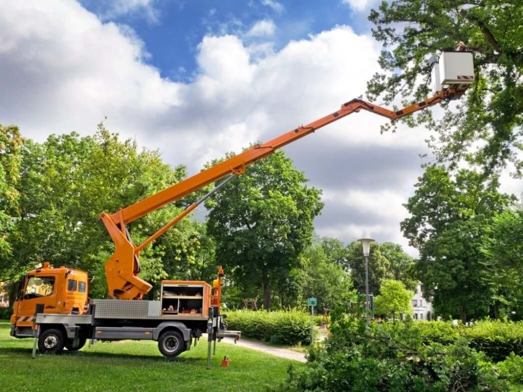 Contact Us-Myrtle Beach's Best Tree Care Services-We Offer Tree Trimming Services, Tree Removal, Tree Pruning, Tree Cutting, Residential and Commercial Tree Trimming Services, Storm Damage, Emergency Tree Removal, Land Clearing, Tree Companies, Tree Care Service, Stump Grinding, and we're the Best Tree Trimming Company Near You Guaranteed!