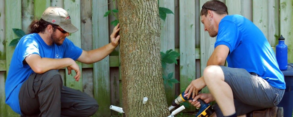 Deep-Root-Injection-Myrtle Beach's Best Tree Care Services-We Offer Tree Trimming Services, Tree Removal, Tree Pruning, Tree Cutting, Residential and Commercial Tree Trimming Services, Storm Damage, Emergency Tree Removal, Land Clearing, Tree Companies, Tree Care Service, Stump Grinding, and we're the Best Tree Trimming Company Near You Guaranteed!