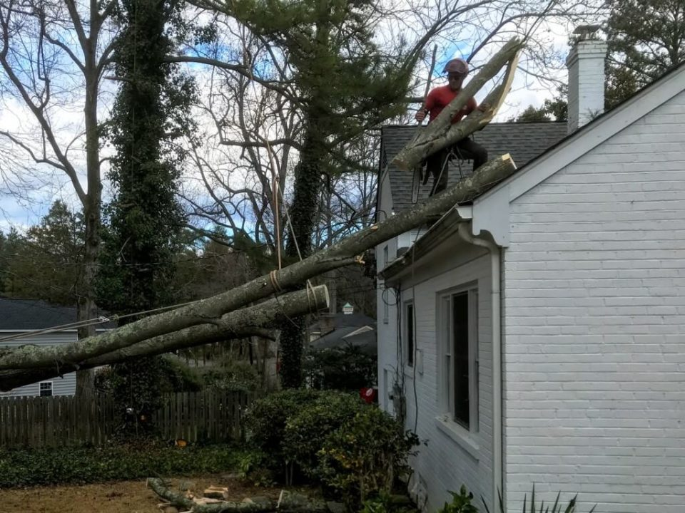 Emergency-Tree-Removal-Myrtle Beach's Best Tree Care Services-We Offer Tree Trimming Services, Tree Removal, Tree Pruning, Tree Cutting, Residential and Commercial Tree Trimming Services, Storm Damage, Emergency Tree Removal, Land Clearing, Tree Companies, Tree Care Service, Stump Grinding, and we're the Best Tree Trimming Company Near You Guaranteed!