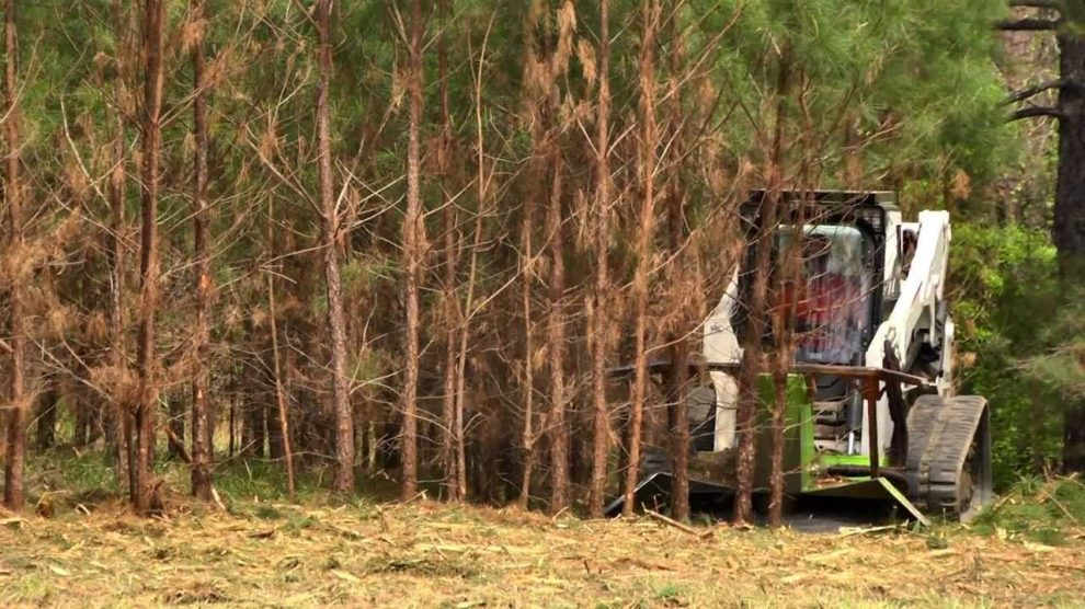 Land-Clearing-Myrtle Beach's Best Tree Care Services-We Offer Tree Trimming Services, Tree Removal, Tree Pruning, Tree Cutting, Residential and Commercial Tree Trimming Services, Storm Damage, Emergency Tree Removal, Land Clearing, Tree Companies, Tree Care Service, Stump Grinding, and we're the Best Tree Trimming Company Near You Guaranteed!