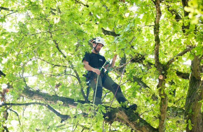 Myrtle Beach's Best Tree Care Services Home Page Image-We Offer Tree Trimming Services, Tree Removal, Tree Pruning, Tree Cutting, Residential and Commercial Tree Trimming Services, Storm Damage, Emergency Tree Removal, Land Clearing, Tree Companies, Tree Care Service, Stump Grinding, and we're the Best Tree Trimming Company Near You Guaranteed!