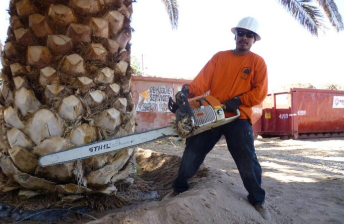 Palm-Tree-Removal-Myrtle Beach's Best Tree Care Services-We Offer Tree Trimming Services, Tree Removal, Tree Pruning, Tree Cutting, Residential and Commercial Tree Trimming Services, Storm Damage, Emergency Tree Removal, Land Clearing, Tree Companies, Tree Care Service, Stump Grinding, and we're the Best Tree Trimming Company Near You Guaranteed!