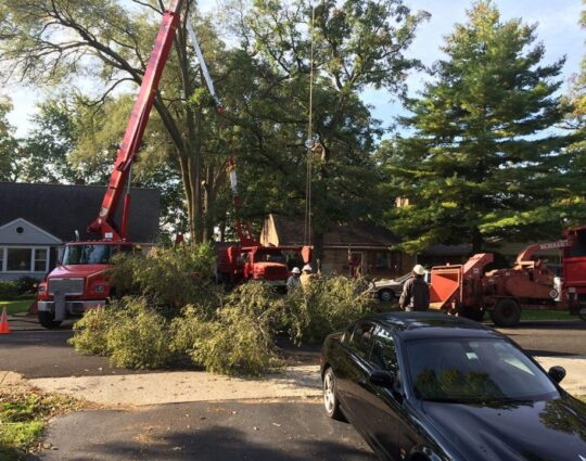Residential-Tree-Services-Myrtle Beach's Best Tree Care Services-We Offer Tree Trimming Services, Tree Removal, Tree Pruning, Tree Cutting, Residential and Commercial Tree Trimming Services, Storm Damage, Emergency Tree Removal, Land Clearing, Tree Companies, Tree Care Service, Stump Grinding, and we're the Best Tree Trimming Company Near You Guaranteed!