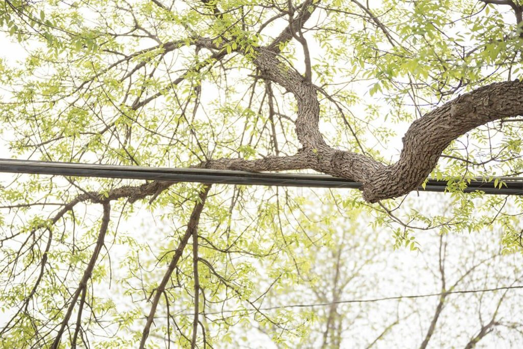 Tree-Bracing-Cabling-Myrtle Beach's Best Tree Care Services-We Offer Tree Trimming Services, Tree Removal, Tree Pruning, Tree Cutting, Residential and Commercial Tree Trimming Services, Storm Damage, Emergency Tree Removal, Land Clearing, Tree Companies, Tree Care Service, Stump Grinding, and we're the Best Tree Trimming Company Near You Guaranteed!