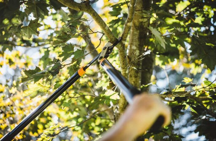 Tree-Pruning-Myrtle Beach's Best Tree Care Services-We Offer Tree Trimming Services, Tree Removal, Tree Pruning, Tree Cutting, Residential and Commercial Tree Trimming Services, Storm Damage, Emergency Tree Removal, Land Clearing, Tree Companies, Tree Care Service, Stump Grinding, and we're the Best Tree Trimming Company Near You Guaranteed!