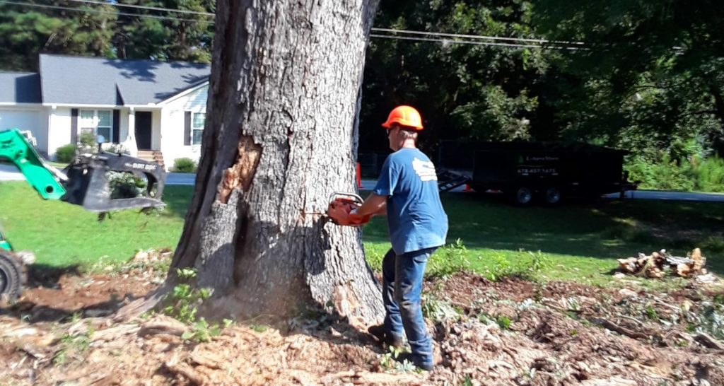 Tree-Removal-Myrtle Beach's Best Tree Care Services-We Offer Tree Trimming Services, Tree Removal, Tree Pruning, Tree Cutting, Residential and Commercial Tree Trimming Services, Storm Damage, Emergency Tree Removal, Land Clearing, Tree Companies, Tree Care Service, Stump Grinding, and we're the Best Tree Trimming Company Near You Guaranteed!
