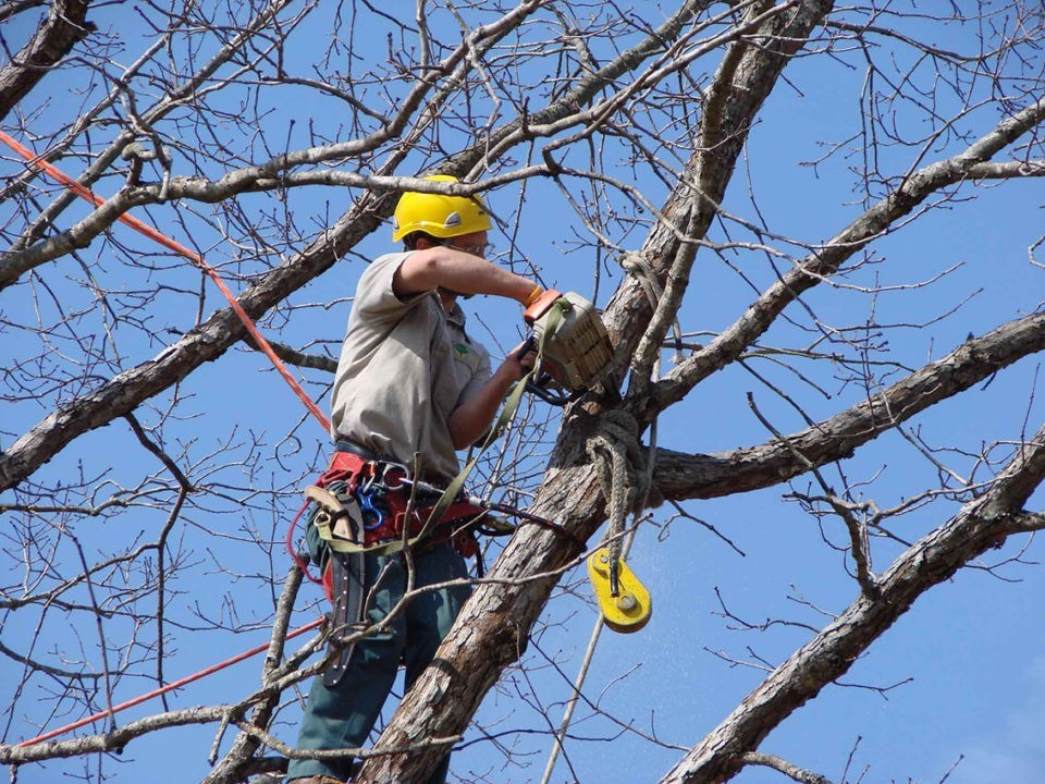 Tree-Trimming-Myrtle Beach's Best Tree Care Services-We Offer Tree Trimming Services, Tree Removal, Tree Pruning, Tree Cutting, Residential and Commercial Tree Trimming Services, Storm Damage, Emergency Tree Removal, Land Clearing, Tree Companies, Tree Care Service, Stump Grinding, and we're the Best Tree Trimming Company Near You Guaranteed!