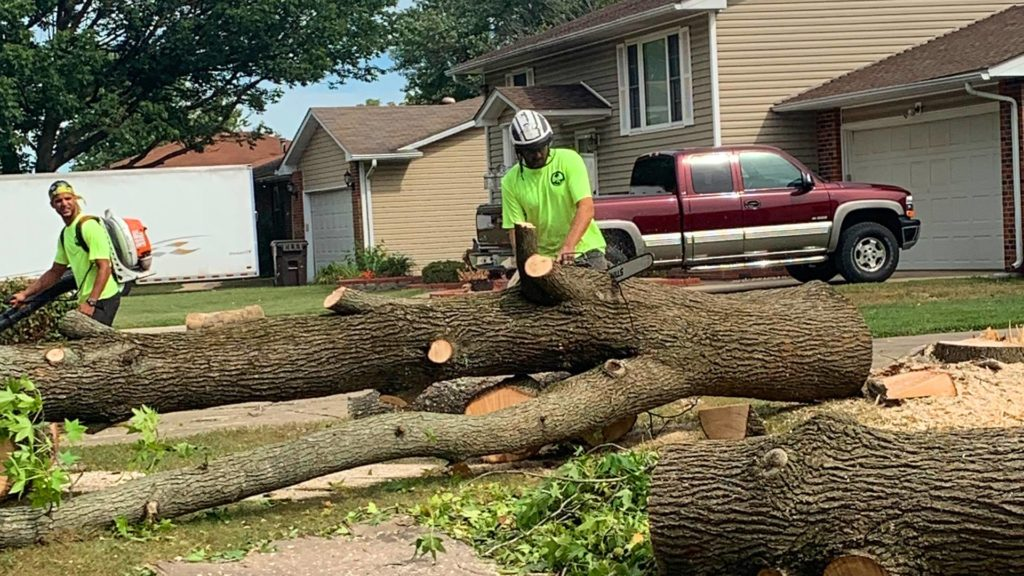 Conway-Myrtle Beach's Best Tree Care Services-We Offer Tree Trimming Services, Tree Removal, Tree Pruning, Tree Cutting, Residential and Commercial Tree Trimming Services, Storm Damage, Emergency Tree Removal, Land Clearing, Tree Companies, Tree Care Service, Stump Grinding, and we're the Best Tree Trimming Company Near You Guaranteed!