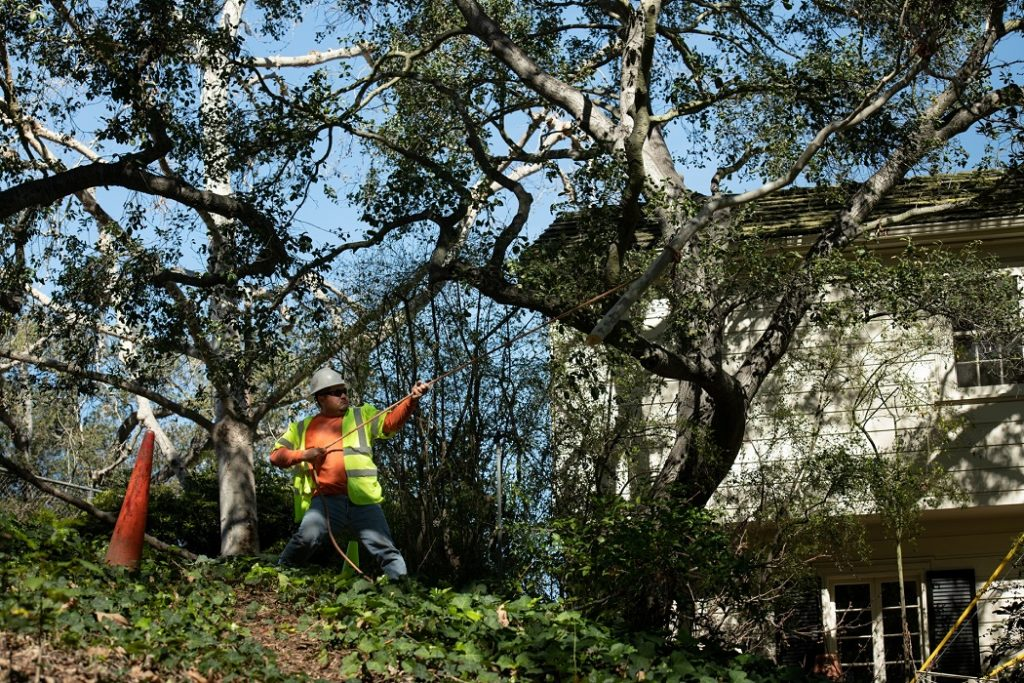 Forestbrook-Myrtle Beach's Best Tree Care Services-We Offer Tree Trimming Services, Tree Removal, Tree Pruning, Tree Cutting, Residential and Commercial Tree Trimming Services, Storm Damage, Emergency Tree Removal, Land Clearing, Tree Companies, Tree Care Service, Stump Grinding, and we're the Best Tree Trimming Company Near You Guaranteed!