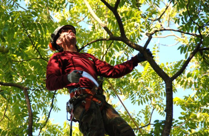 Surfside Beach-Myrtle Beach's Best Tree Care Services-We Offer Tree Trimming Services, Tree Removal, Tree Pruning, Tree Cutting, Residential and Commercial Tree Trimming Services, Storm Damage, Emergency Tree Removal, Land Clearing, Tree Companies, Tree Care Service, Stump Grinding, and we're the Best Tree Trimming Company Near You Guaranteed!